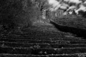 """Non bisogna temere di essere a """"Il primo scalino"""" nella penna di Costantino Kavafis."""